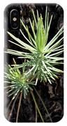Ponderosa Pine 3 IPhone Case