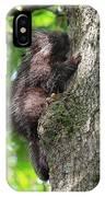 Porcupine In Sherbrooke Quebec IPhone Case