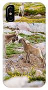 Practicing Baby Bighorn Sheep On Mount Evans Colorado IPhone Case