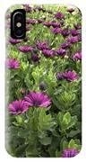 Prescott Park - Portsmouth New Hampshire Osteospermum Flowers IPhone Case