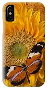 Pretty Butterfly On Sunflowers IPhone Case
