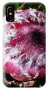 Protea Flower 1 IPhone Case