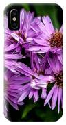 Purple Aster Blooms IPhone Case