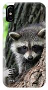 Racoons In Tree IPhone Case