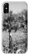 Rare Palm Trees Curacao IPhone Case