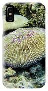 Razor Coral In Kwajalein IPhone Case