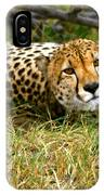 Reclining Cheetah IPhone Case