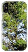 Red Cardinal In Tree IPhone Case