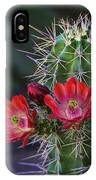 Red Claret Cup Cactus  IPhone Case