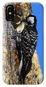 Red Cockaded Woodpecker Mother Feeding IPhone Case