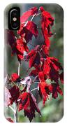 Red Fall Leaves In The Sun IPhone Case