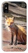 Red Fox In Maine IPhone Case