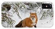 Red Fox In Winter IPhone Case