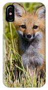 Red Fox Pictures 7 IPhone Case