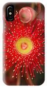 Red Gum Flower Macro IPhone Case