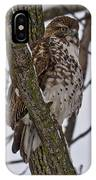 Red Shouldered Hawk - Madison - Wisconsin IPhone Case