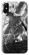 Red Tail Hawk In Black And White IPhone Case by Deleas Kilgore