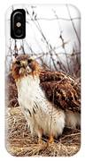 Red Tailed Hawk In The Field IPhone Case