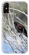 Red Winged Black Bird At Chatfield IPhone Case