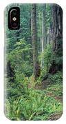 Redwood Park Trail IPhone Case