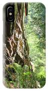Redwood Tree Art Prints Redwoods Forest IPhone Case