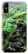 Redwood Tree Forest Fern Art Prints Ferns Giclee Baslee Trouman IPhone Case