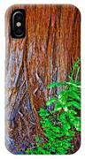 Redwood Tree Trunk At Pilgrim Place In Claremont-california   IPhone Case