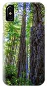 Redwoods National Forrest Trees Of Mistery IPhone Case