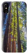 Redwoods Of Muir Woods IPhone Case