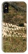 Resting Cheetah IPhone Case