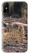 Resting Coyote IPhone Case