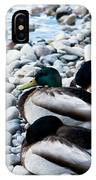 Resting Ducks IPhone Case