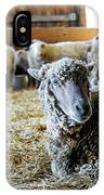 Resting Sheep IPhone Case
