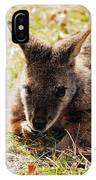 Resting Wallaby IPhone Case
