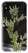 Rhubarb Blossoms IPhone Case