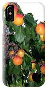 Ripe Apricots IPhone Case
