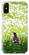 Robin In A Field Of Daisies IPhone Case
