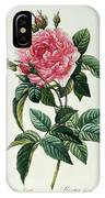 Rosa Gallica Regalis IPhone Case