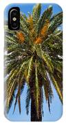 Royal Palm In Florida IPhone Case