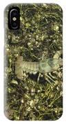 Rusty Crayfish At Night IPhone Case