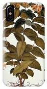 Saint-johns-wort, 1613 IPhone Case