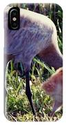 Sandhill Crane And Chick IPhone Case