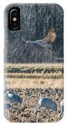 Sandhill Crane Series #3 IPhone Case