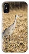 Sandhill Cranes  2015-2 IPhone Case