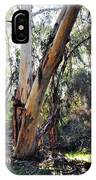 Santa Barbara Eucalyptus Forest IPhone Case