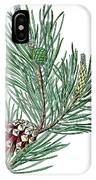 Scots Pine, Pinus Silvestris IPhone Case