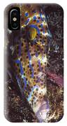 Scribbled Leatherjacket, Aluterus IPhone Case