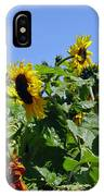 Sea Of Sunshine IPhone Case