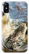 Sea Otter Portrait IPhone Case