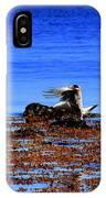 Seagul Landing IPhone Case